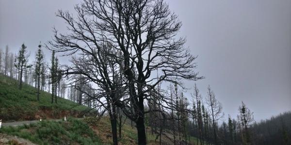 Acción solidaria de la FALP para reforestar Gran Canaria