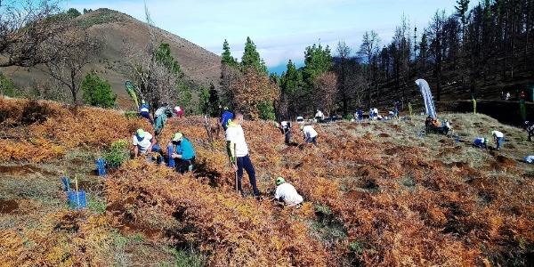 La FALP con la reforestación de la isla de Gran Canaria